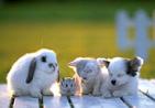 Animaleries / Toiletteurs